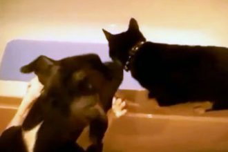 Videos Engraçados: Os Gatos Mais Engraçados do Youtube