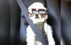 cachorro-rapper