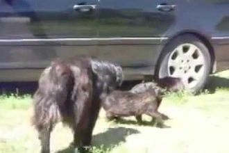 Cachorros Responsáveis Separam Briga Entre Gatos