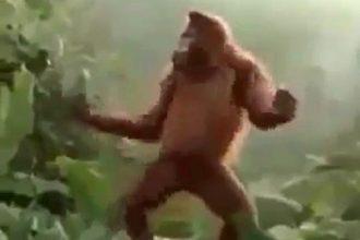 hoje-e-sexta-feira-gorila