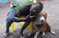 cachorro-morde-corinthiano