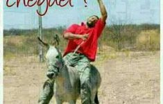 cheguei-whatsapp-bebado-cavalo