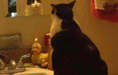 meu-deus-sou-um-gato