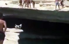 cachorro-aventureiro
