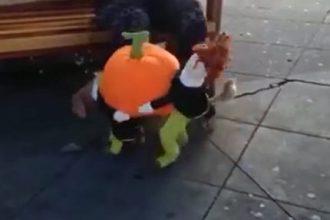 carregando-a-laranja