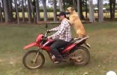 cachorro-na-garupa