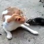 trollando o gato
