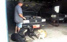 Cachorros Ajudantes