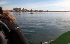 pai-e-filha-levantados-por-baleia