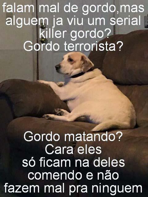 Fotos Engraçadas ComGordos cachorro