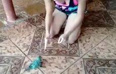 papagaio-ator