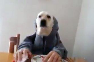 cachorro-humano