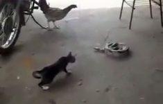 susto-no-gato