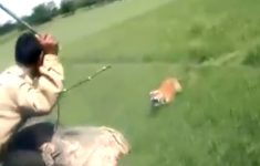 nunca-brinque-com-um-tigre