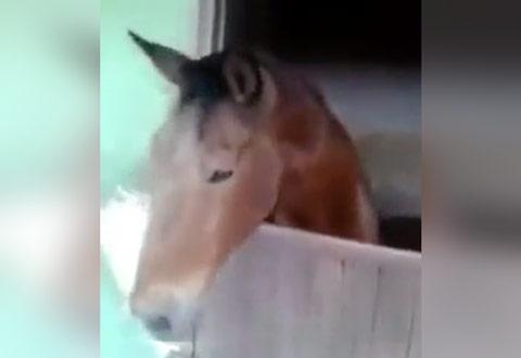 cavalo-denunciando-adm-do-grupo