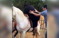cavalo-derrubou-o-gordinho