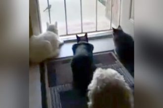 Gatos: Fazendo armadilha pro gato