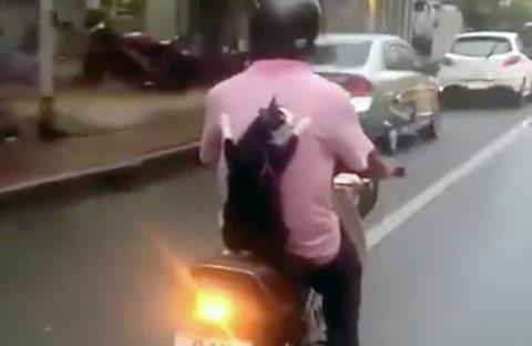 gato-pegando-carona