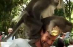 macacos-sexo-pescoco-turista2