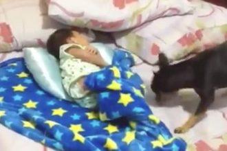 Videos Fofos: Tatu se refrescando
