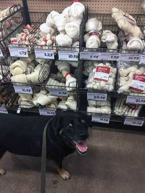 paraiso-dos-cachorros