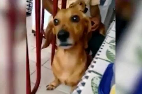 queijo-nao-e-pra-cachorro