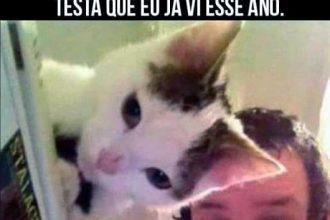 Ilusão de ótica com gato