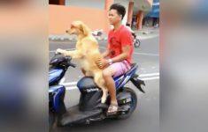Pegando carona com o cachorro