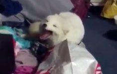cachorro-rindo-junto