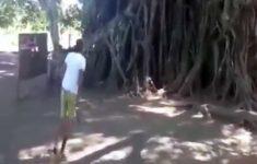 o-homem-macaco