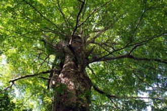 Mensagens: Seja como uma árvore