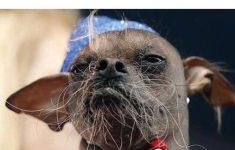 achando-que-tem-barba