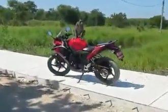 Videos Engraçados: Apanhando do Macaco Folgado