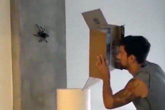 Vídeos Assustadores: Capturando uma aranha gigante