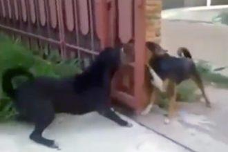 Cachorros: Se não fosse esse portão