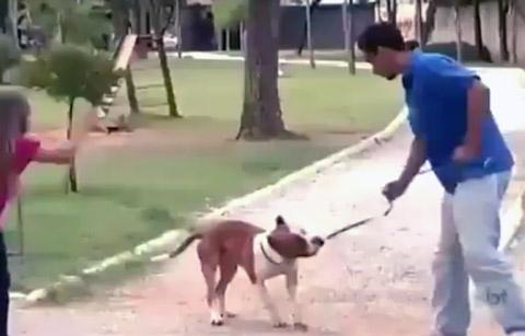 moco-cade-o-cachorro