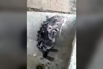 Videos: Rato Tomando Banho