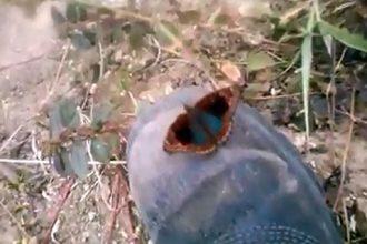 Videos Religiosos: Borboleta com Nossa Senhora Aparecida em Mariana
