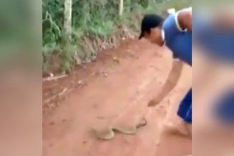 Baixar video Pegando a cobra com a mão