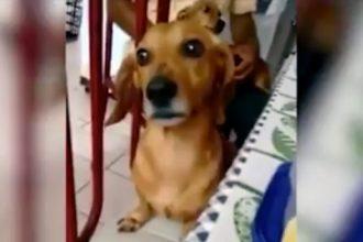 Videos Fofos: Cachorro cantor tocando piano