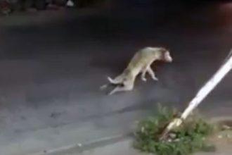 Baixar video Cachorro se fazendo de alejado