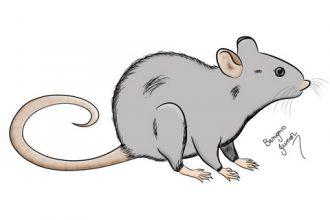 Textos e Correntes: A Lição do Rato